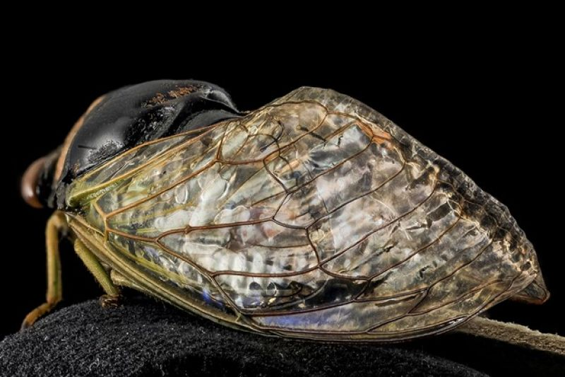 Wings of cicada inspire new material processes