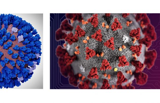 computer simulated models depicting an all-atom model of the influenza virus on the left and the coronavirus on the right.