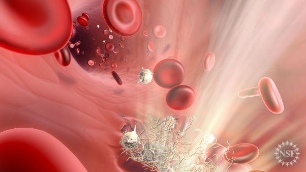 Red blood cells flow past a tear in a blood vessel
